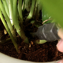plant watering bulbs
