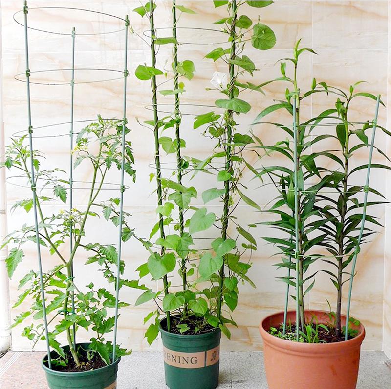 Garden Plant Support Frame Plant Trellis Climbing Garden DIY ...