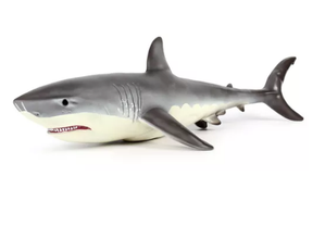 Lifelike Baby Shark