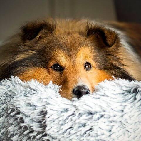 pet boutique co deepsleep calming dog bed