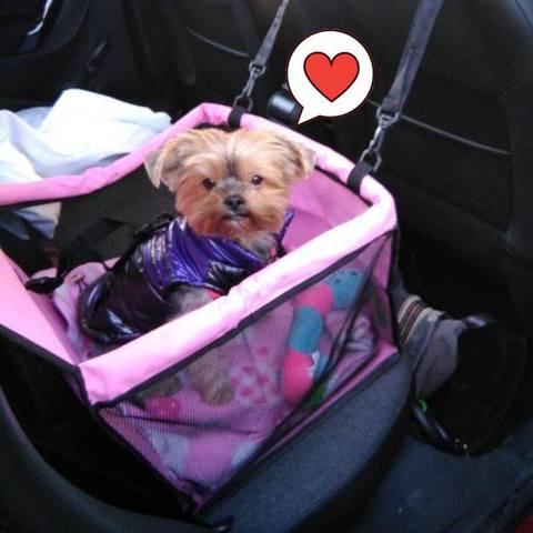 Dog Safety Car Seat